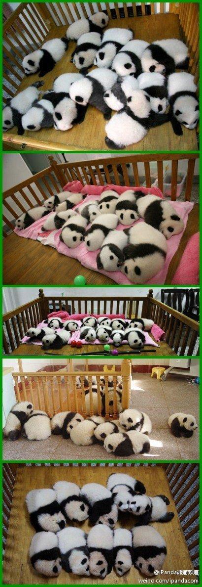 Ya'an, Yǎ'ān,panda